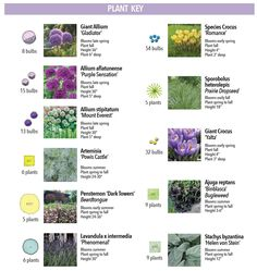 How to Use Alliums in a Naturalistic Garden Design - Longfield Gardens