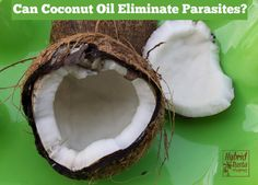 Can Coconut Oil Eliminate Parasites? Find out why you should add more coconut to your diet is pesky parasites are getting you down! From HybridRastaMama.com
