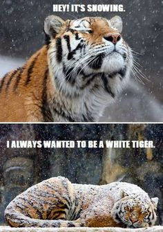 I wanna be a white tiger jajajaja