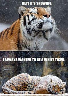 I wanna be a white tiger jajajaja