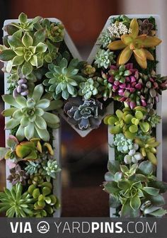 Neat! - Plant A Vertical Succulent Garden, by AfroChic. I have so many succulents, they keep multiplying!!   Check out these other neato inspirations for great succulents at yardpins.com   #succulents #cactus #sedum #gardens #gardening #botany #horticulture #flowers #trees #plants