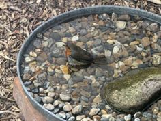 Birdbath made from old lid turned upside down, some pebbles & a larger rock all laid on bricks to elevate slightly.