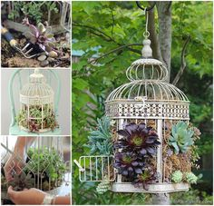 """Previous pinner wrote, """"Bird Cages and Succulents ~ Heres a crafty, container DIY that is fun to do. Take a decorative hinged bird cage, line it with moss, plant it with succulents—hang and enjoy. Succulent Gardening, Succulent Terrarium, Garden Planters, Succulents Garden, Garden Art, Container Gardening, Terrariums, Organic Gardening, Birdcage Planter"""