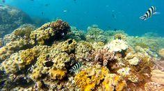 Great Barrier Reef QLD Australia  #whereintheworldwednesday #greatbarrierreef #qld #australia #travel #travelgram #instatravel #instagood #scuba #snorkel #water #underwater #diving #fish #sea #coral #wanderlust by mrscourtneyhorton http://ift.tt/1UokkV2