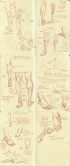 anatomy dump 2 by kakimari on deviantART via PinCG.com Drawing tutorial art how to draw