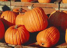 Amish Pumpkin Bars and Pumpkin Memories