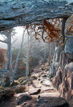 Carmel | Cypress grove trail at Point lobos