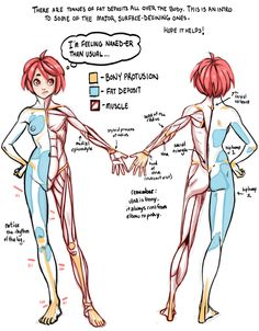guide to surface quality showing: fat, bones & muscle. artist unknown