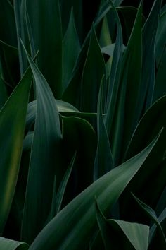 Green Leaves, Plant Leaves, Dark Green Aesthetic, Slytherin Aesthetic, Tumblr Photography, Photography Flowers, Leaf Photography, Green Life, Green Plants