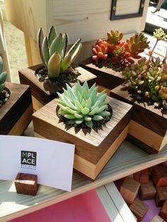 MPlace(엠플레이스)  Flesh plant Wood pot  It is sold at flea market 플리마켓에서 새롭게 선보인 우드포트. 다육이 식물과 함께 잘 어울리게 세팅을 했답니다