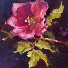 """Daily Paintworks - """"First Spring Rose"""" - Original Fine Art for Sale - © Whitney Hall"""