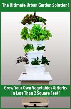 Do you want to grow your own vegetables and herbs but live in a townhouse or apartment? The Magic Tower Pro is the perfect solution! It allows you to grow 16 plants in less than 2 square feet! #GYO #ApartmentGarden #UrbanGarden