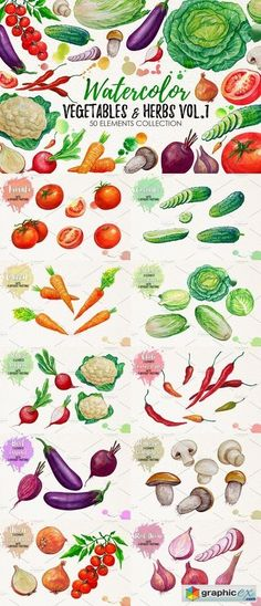 Watercolor Vegetables Herbs  stock images
