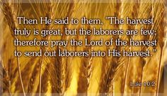 """""""Our Daily Bread""""  The Daily Devotions of Greg Laurie Written by bruce r. mills @ www.Godsmanforever.com """"Why Do Many Christians'…"""