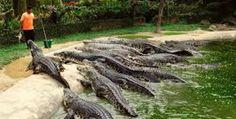 Magic crocodile