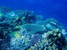 The view beneath our Fiji hub. Marine Conservation, Fiji, Kenya, United Kingdom, England, Fiji Islands