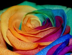 Rainbow Rose by WildLotus.deviantart.com on @deviantART