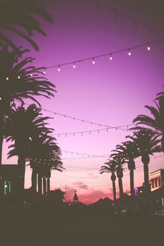 Palm Trees Purple Sunsets  The Pantone Colour Of The