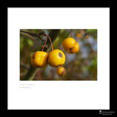 cool Fotografie »Herbstapfel 2«,  #Herbst #Naturansichten