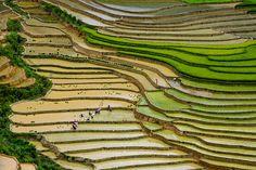 Entre los paisajes con terrazas de arroz más bonitos del mundo, Mu Cang Chai (Vietnam)