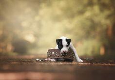 puppy power by Monica van der Maden on 500px