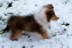 Puppy experiences his first snow....