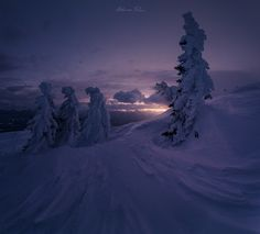 The Guardians (One Year Later) by Bruno Pisani   Almost one year ago I took this shot, which is still one of my favourites of mine. I was walking in the snow on Mt. Dobratsch, Austria, while i found these amazing frozen trees. So I shot a panorama on 4-5 images to emphasize the lines of th