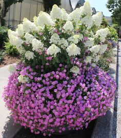 Bobo Hydrangea are a rather hardy plant, but the one bloom for approximately 6 weeks. Here are some inspiring ideas to make Bobo Hydrangea garden landscaping. Bobo Hydrangea, Hydrangea Garden, Garden Shrubs, Flowering Shrubs, Hydrangea Flower, Flower Pots, Hydrangea Shade, Dwarf Hydrangea, Hydrangeas