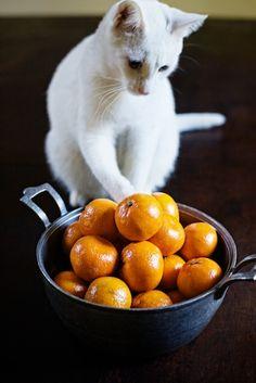 tangerine sorbet and chevre tart