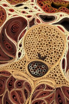 Abdomen-detail... Slice of Life: Artistic Cross Sections of the Human Body  @SmithsonianMag
