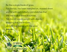 Scientifically speaking what is a blade of grass?