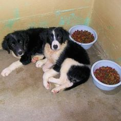 If you hate seeing photos like this one of Twilight and Eclipse at the shelter before we pulled them out please consider donating to The Dog Liberator on #GivingTuesday.  It's the #unselfie thing to do!  Visit http://ift.tt/1QDOVR6