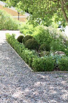 studio karin Stepping Stones, The Outsiders, Sidewalk, Organic, Studio, Outdoor Decor, Plants, Ideas, Photo Illustration