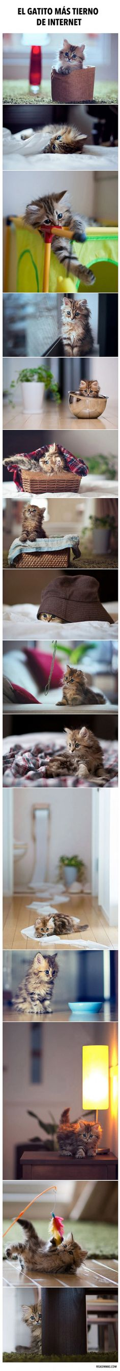 Oh my gosh tiny kitten! Kittens And Puppies, Cute Cats And Kittens, I Love Cats, Crazy Cats, Kittens Cutest, Cute Small Animals, Animals And Pets, Baby Animals, Funny Animals