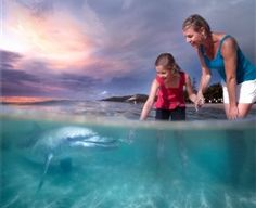 Tangalooma Dolphin Feeding  - Things To See and Do - Queensland Holidays