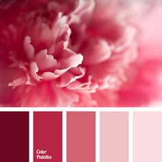 The most delicate gradient palette of shades of pink colour, it would be appropriate for a wedding, celebration, birthday of a girl and for a birthday of y.