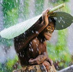 Xiii Esqueceu o guarda chuva hein??