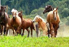 Výsledok vyhľadávania obrázkov pre dopyt Orava Horses, Animals, Pray, Animales, Animaux, Animal, Animais, Horse