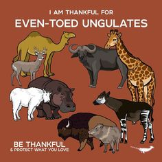 I Am Thankful For Even-Toed Ungulates by PepomintNarwhal Animals Of The World, Animals And Pets, Baby Animals, Fun Facts About Animals, Animal Facts, Curious Creatures, Wild Creatures, Animal Posters, Mundo Animal