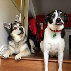 Walk?   http://ift.tt/2ryVZpv via /r/dogpictures http://ift.tt/2qPZLOb  #lovabledogsaroundtheworld