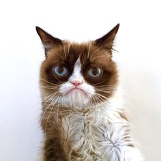 Grumpy Cat, AKA , Tardar Sauce, actually has feline Downs Syndrome. Thus the reason for the odd unchanging facial expression.
