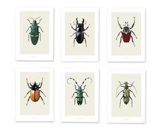Bugsbox set 6 posters kevers - Hagedornhagen - BijzonderMOOI* - Dutch design