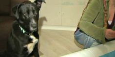 Abandoned dog leads rescuers to mom