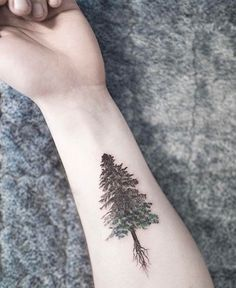 Black evergreen tree tattoo.