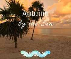Autumn by the Sea Beautiful Beach Pictures, Beautiful Beaches, Beach Life Quotes, Coastal Fall, Autumn, Sea, Fall Season, Fall, The Ocean