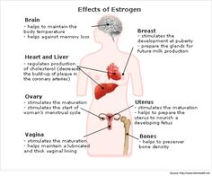 Estrogen Rich foods To cover for your deficiencies