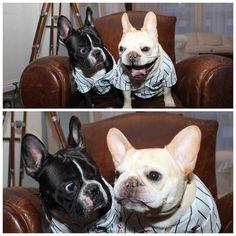 dog イヌ 犬可愛い画像まとめ http://ift.tt/1RArOCO
