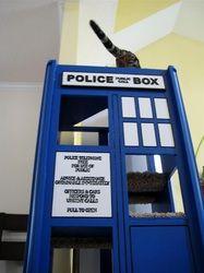 Cat TARDIS - Jad Bean