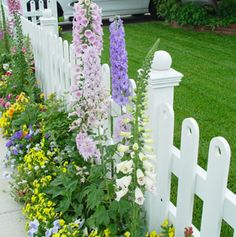 English garden- stock flower and picket fence