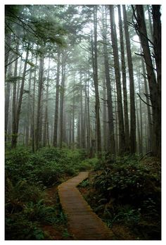 This photo was taken on the Sand Point Trail in the Olympic National Park in Washington State. This trail starts at Lake Ozette and leads to the Pacific Coast. It's a fairly short trail and most of it is boardwalk, which makes for an extra easy walk (but quite slippery if wet). The trail covers some marshy land due to the natural rain forest along the Olympic Peninsula (in Washington). Photo by Brian Schwartz http://www.trekearth.com/members/umbrellaphotos/